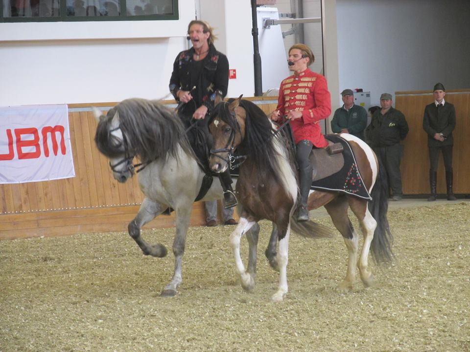 szilv225sv225radon a nemzeti lovas sz237nh225z nemzeti lovas